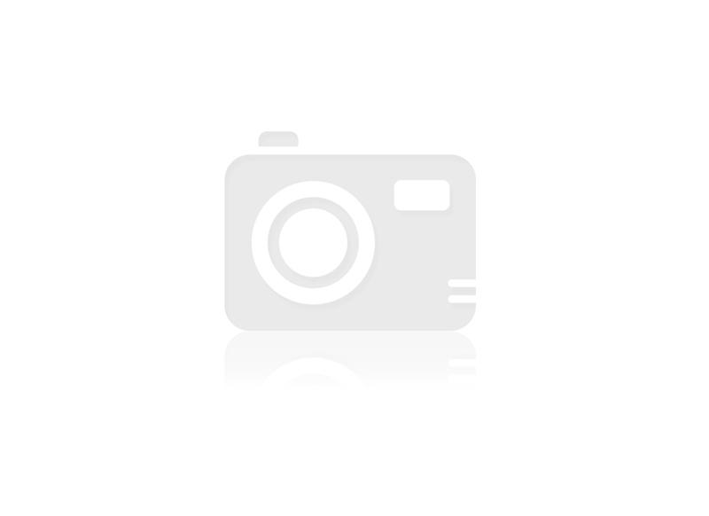 Palmboom KCPB01